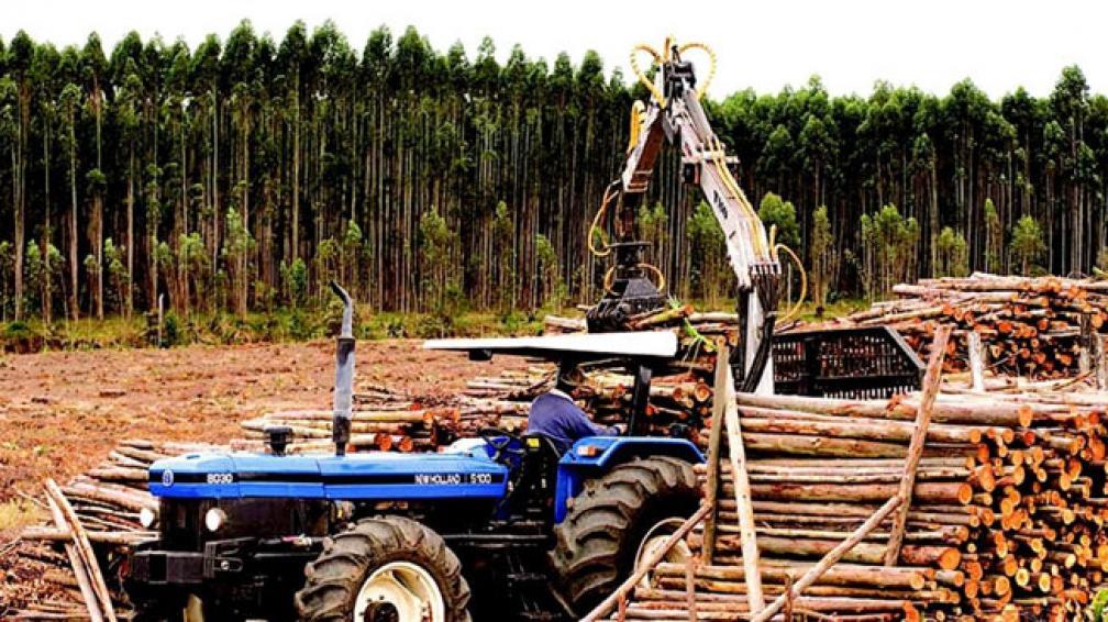 En el siglo 20, Argentina perdió el 70% de sus bosques nativos | La
