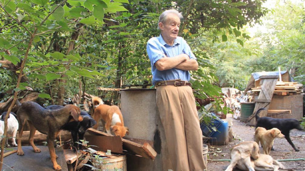 Los atiende en su casa. José alimenta y cuida a 70 perros sin dueño en Colonia Caroya. Pide ayuda a la gente y al municipio (La Voz).