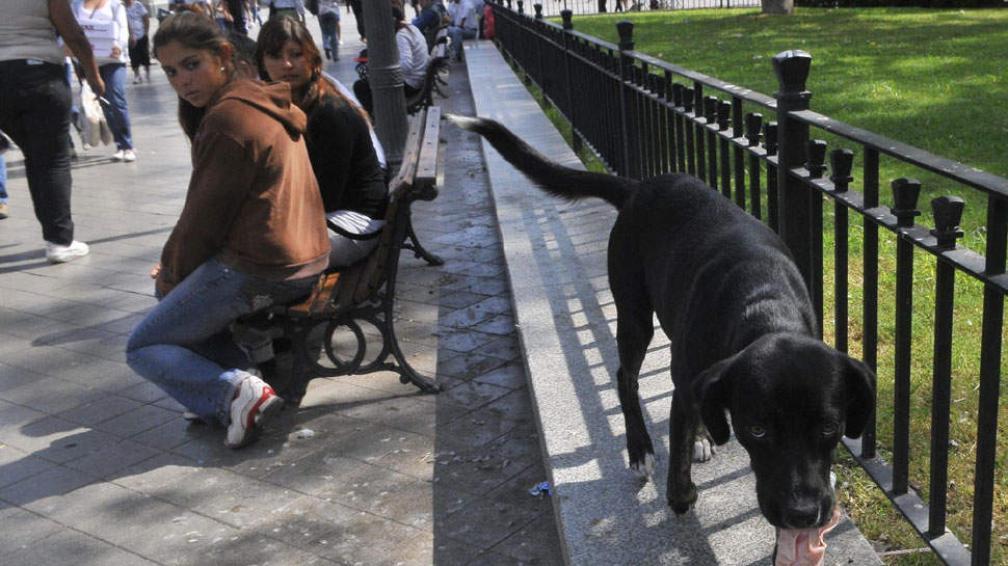 La plaza, su hogar. En la Plaza San Martín, viven perros alimentados por comerciantes y transeúntes (Raimundo Viñuelas / La Voz).