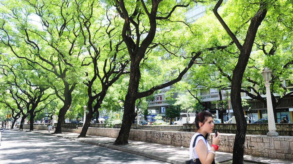 D a del rbol protegerlos para que la ciudad no se siga for Arboles perennes en argentina