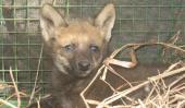 RESCATADO. El cachorro se encuentra bajo cuidado veterinario y será liberado (Gentileza de Policía Ambiental).