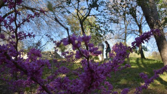 Anticipo de primavera. En La Tormentosa ya hay cientos de ejemplares florecidos o a punto de hacerlo. Los árboles de Luis tienen identificación. (Andrés blanco)