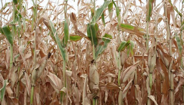 CÓRDOBA. La sequía afecta al 37% de la provincia (La Voz/Archivo).
