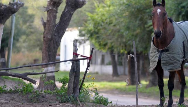 El caballo, protagonista. El tipo de suelo que se encuentra en la zona es muy apto para la cría (Tomy Fragueiro).