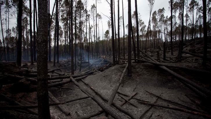 VILLA ALPINA. Tras el paso del fuego (Nelson Torres/LaVoz).