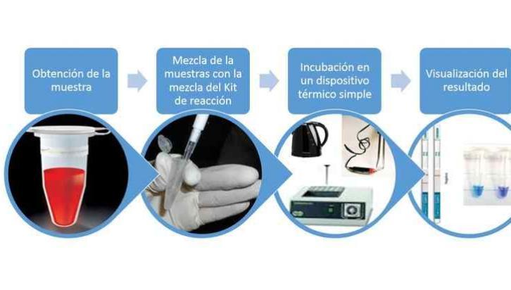 Uno de los grandes ganadores. Un kit para detectar el mal de Chagas. Detecta el patógeno en lugar de la respuesta inmune del paciente.